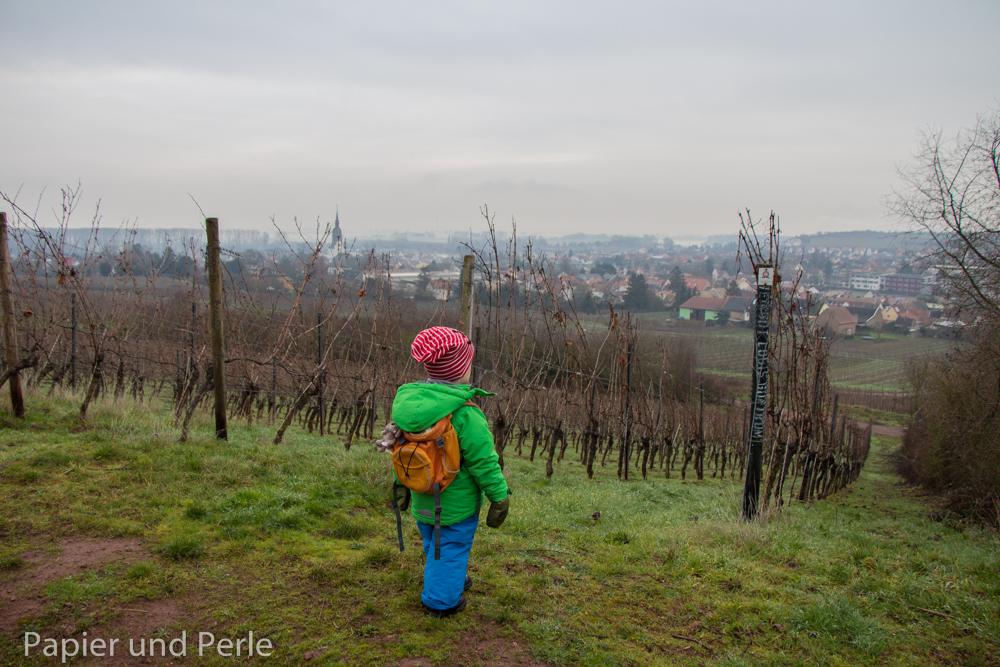 Spaziergang: mit Kind und Kegel durch die Weinberge